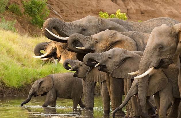 elefantok-630-410